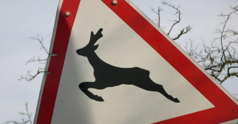 Vadállatok, vadveszély elkerülése az utakon