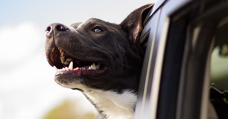 Tippek ahhoz, hogy együtt utazhasson kutyájával