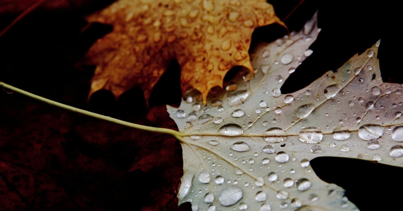 Jobban figyeljünk ősszel, fokozott a balesetveszély!