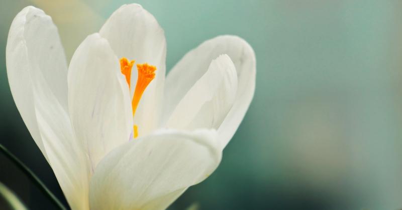 Nyílik a virág